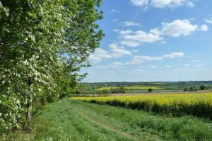 The Leam valley from near the pear tree (Frances Wilmot)